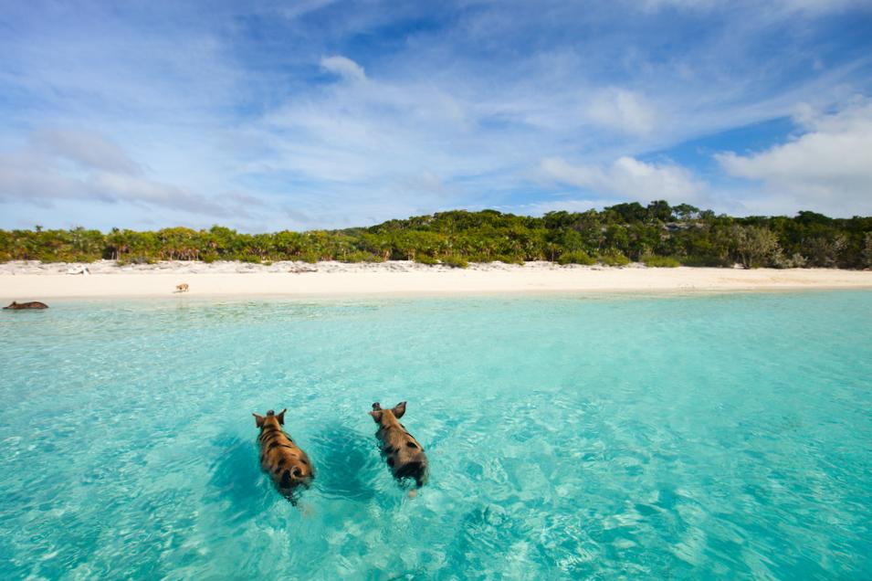 Karaiby, Wyspa Świń